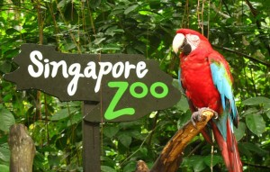Chết mê với những trải nghiệm không thể bỏ qua khi du lịch Singapore 2