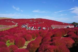 Không thể bỏ qua chuyến du lịch đến Ibaraki, Nhật Bản 2
