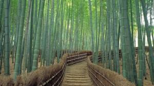 Không thể bỏ qua chuyến du lịch đến Ibaraki, Nhật Bản 3