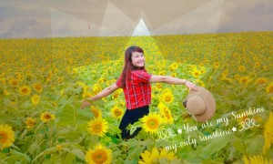 tour-sunflower