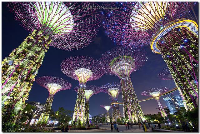 khu vườn cây nhân tạo với hệ thống siêu cây năng lượng mặt trời